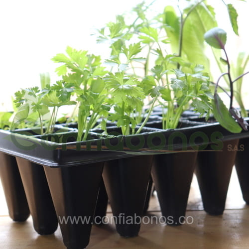 Plantas en bogota Colombia - matas - maticas - plantulas de hortalizas por bandeja - Viveros en bogota Colombia - jardineria - confiabonos
