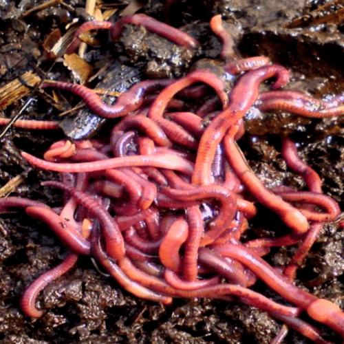 Fertilizantes en bogota Colombia - abonos organicos bogota Colombia - lombriz roja - Viveros en bogota Colombia - jardineria – confiabonos